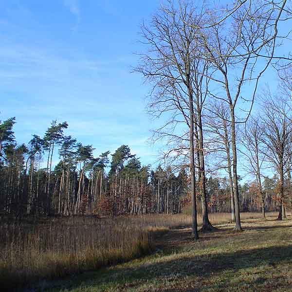 Nederweert, Weerterbos - Vakantie in Limburg