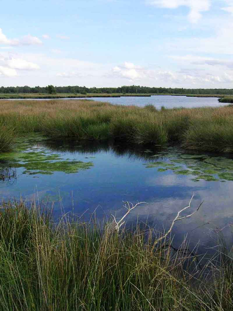 Nationaal Park De Groote Peel - Vakantie in Limburg