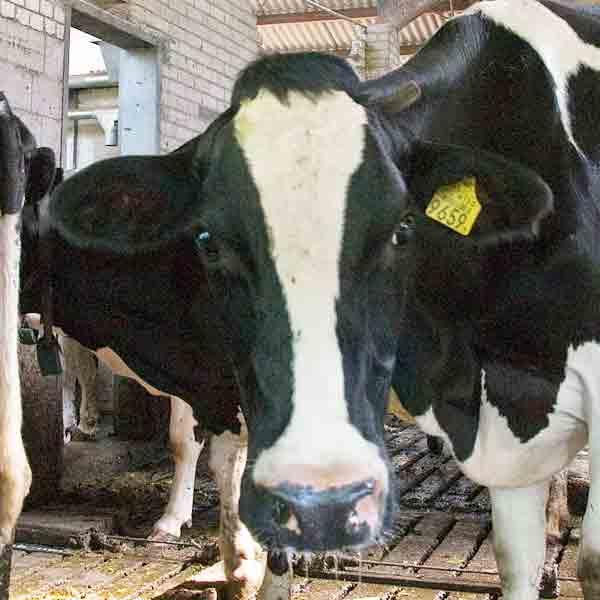 Limburgse boeren verkopen het vaakst direct aan consument - Vakantie in Limburg