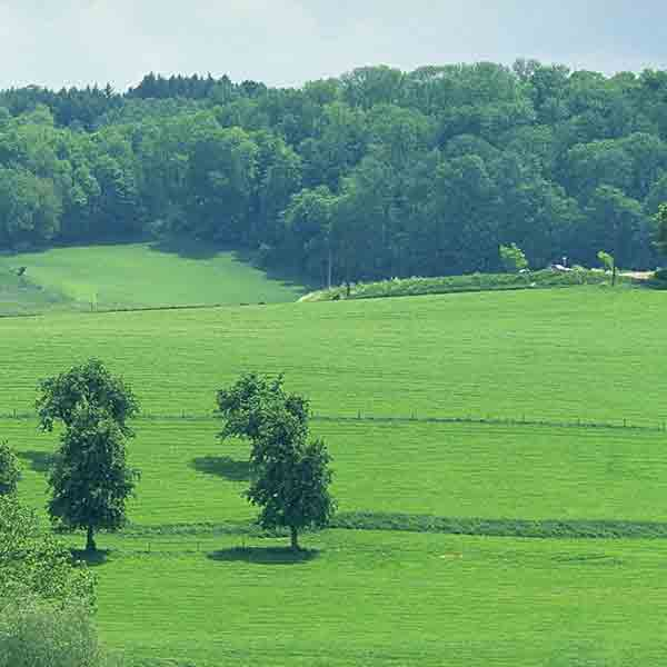 Limburg krijgt er één miljoen bomen bij