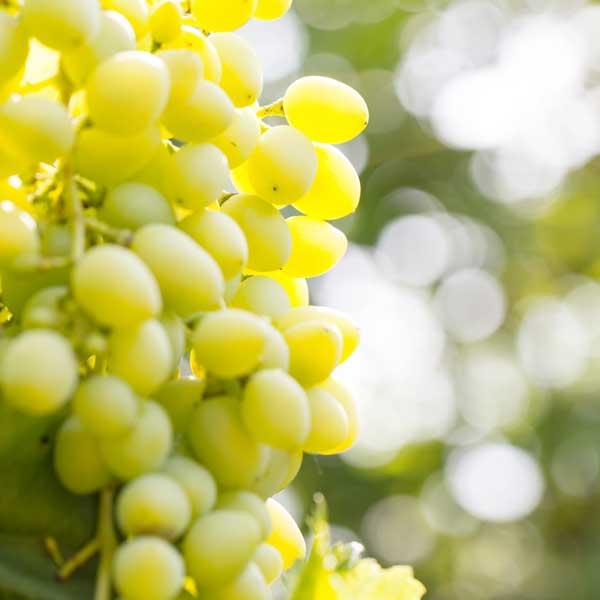 Eerste bewegwijzerde wijnroute voor wijnregio Zuid-Limburg