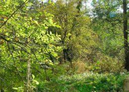 Miljoen bomenplan werkt als olievlek